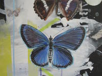 Lepidoptera by Mary Lottridge