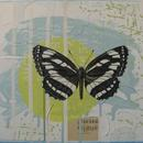 "Common Glider, 20"" x 16"", acrylic and mixed media on masonite by Mary Lottridge"