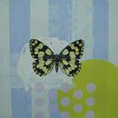 "Marbled White 2, 23"" x 17.5"", acrylic on mylar"