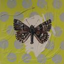 "Marbled Skipper, 9"" x 12"", acrylic on wood cradle"