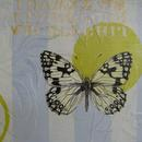 "Western Marbled White, 11"" x 14"", acrylic and mixed media on masonite by Mary Lottridge"