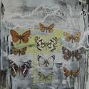 "Butterfly Assortment, 20"" x 27"", acrylic on mylar by Mary Lottridge"