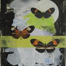 "Three Postman Butterfly, 20"" x 27"", acrylic on mylar by Mary Lottridge"