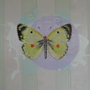 "Clouded Yellow, 24"" x 18"", acrylic on mylar by Mary Lottridge"